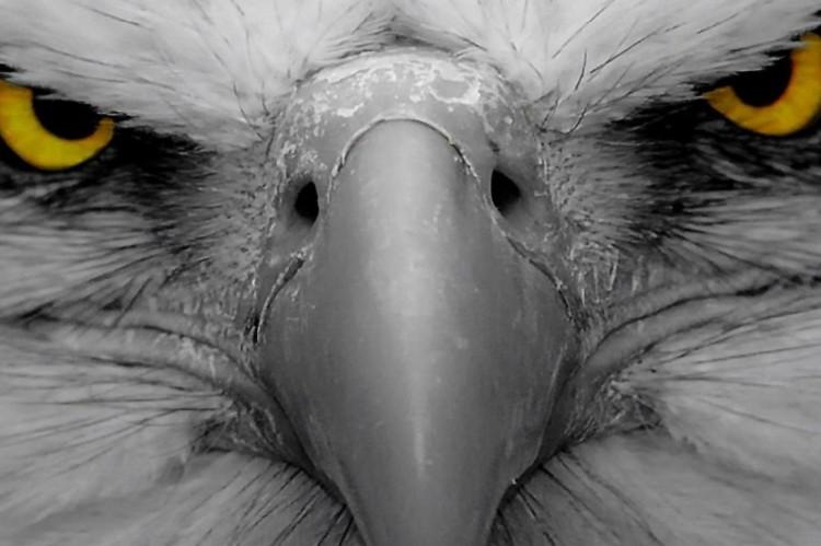 Eagle Eye Focus