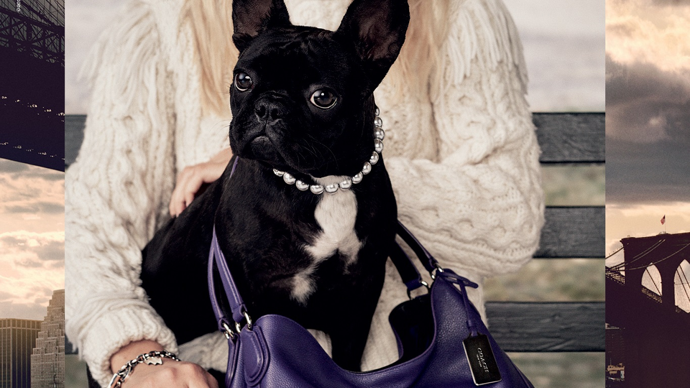 coach pups campaign using lady gaga dog