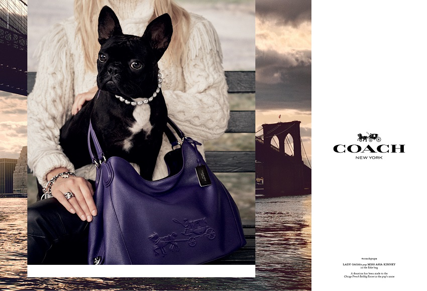 coach pups campaign using lady gaga